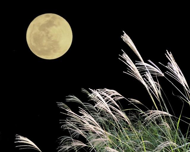 昨日の夜の素敵なお月さまにふさわしくないここだけの話。