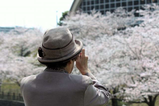 桜を撮影する高齢者